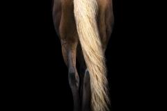 Cavallo-XIII