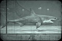 10_Requin Blanc
