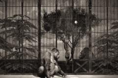 15_Gorilles dans un Décor