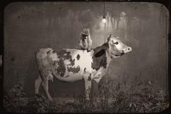 18_Vache et Singe devant un Décor