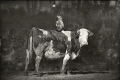 20_Vache et Singe 5