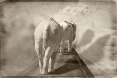 7_Elephants on a Bridge