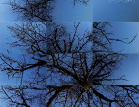 arbre-de-Belfort-restaureP01C-T